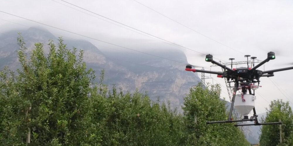 I Droni in campo nella lotta contro la mosca della frutta