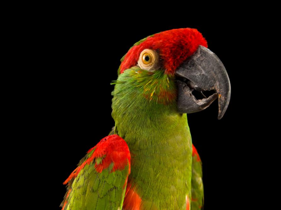"""Il progetto """"Endangered Colour"""" di Oppo e National Geographic"""